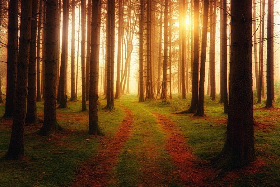 Efterår i skoven