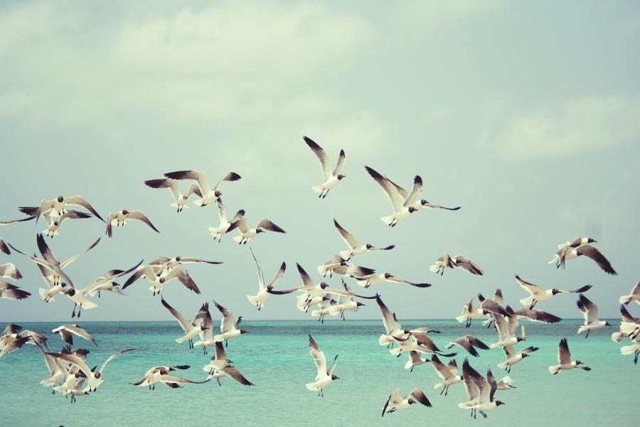 """Vi anbefaler """"Hvor der er fugle"""" af Maren Uthaug"""